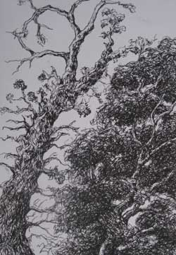 Pen and Ink of Tree from Below